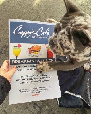 @jameson.the.french.bulldog knows where he's going for brunch this weekend 😍  Our dog friendly patio awaits 🐶  . . . #dogs #brunch #cappys #feedfeed #eater #eeeeeats #yum #feast #weekend #weekendplans #frenchbulldog #cute #doggo #breakfast #puppiesofinstagram #instadog